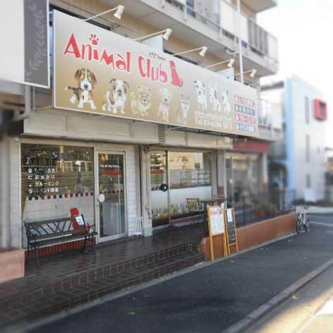 AnimalClub Shop